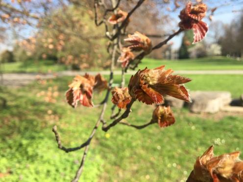 Wie Scherenschnitte entfächern die Blätter langsam ihre Anmut.
